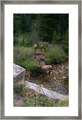 Roadside Luncheon Framed Print by Fortunate Findings Shirley Dickerson