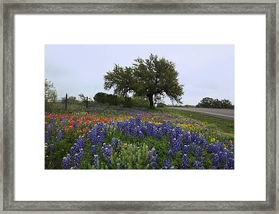Roadside Splendor Framed Print