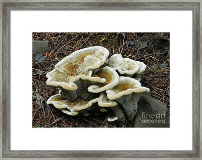 Framed Print featuring the photograph Roadside Treasure by Chalet Roome-Rigdon