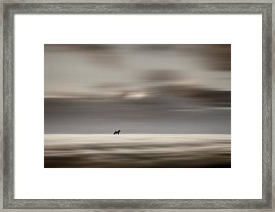 Roaming Free Framed Print