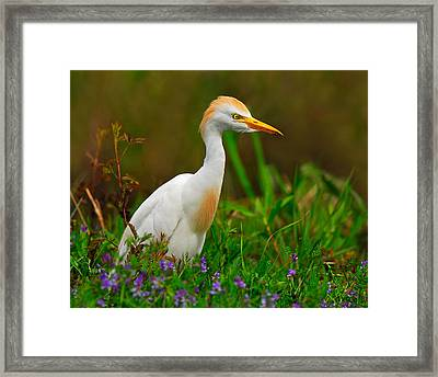 Roaming Through The Field Framed Print by Tony Beck
