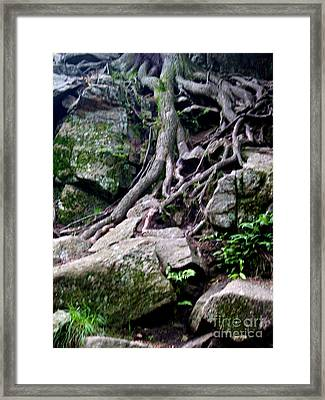 Roaming Tree Roots Framed Print