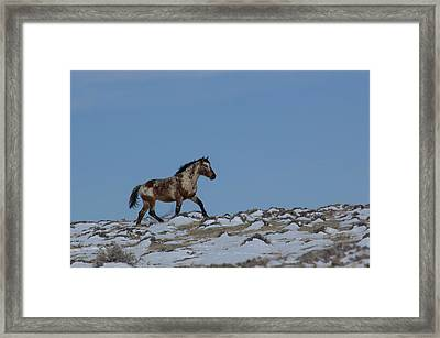 Roan In Snow Framed Print