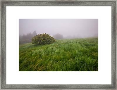 Roan Mountain Appalachian Trail Landscape Photography Windswept Framed Print by Dave Allen