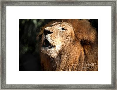Framed Print featuring the photograph Roar - African Lion by Meg Rousher