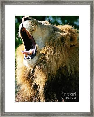 Roar Framed Print by Aimee Lyn