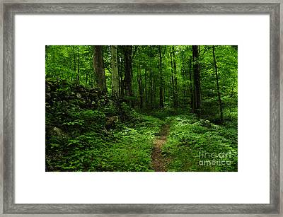 Framed Print featuring the photograph Roaring Fork Trail by Debbie Green