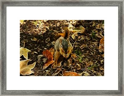 Robbie The Squirrel - 5173 F Framed Print by James Ahn