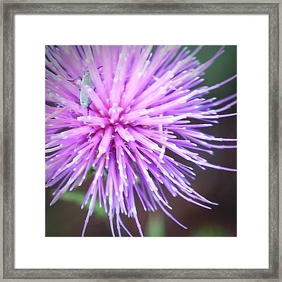 Robert Melvin - Fine Art Photography - Bug And Thistle Framed Print