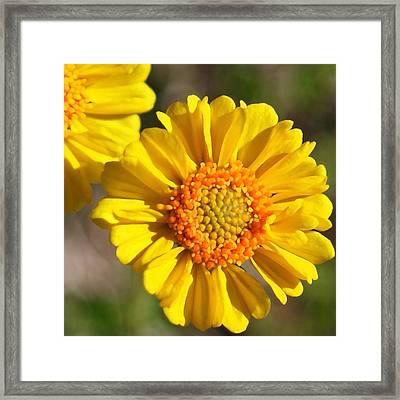 Robert Melvin - Fine Art Photography - Call Me Sunshine Framed Print