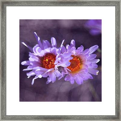 Robert Melvin - Fine Art Photography - Purple Morning Framed Print