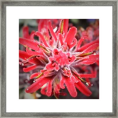 Robert Melvin - Fine Art Photography - Red And Fuzzy Framed Print