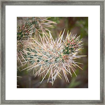 Robert Melvin - Fine Art Photography - Thorny Issue Framed Print