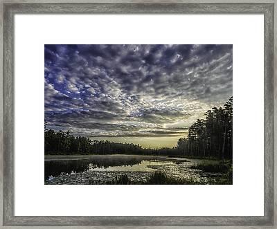 Roberts Branch Pine-lands Landscape Framed Print by Louis Dallara