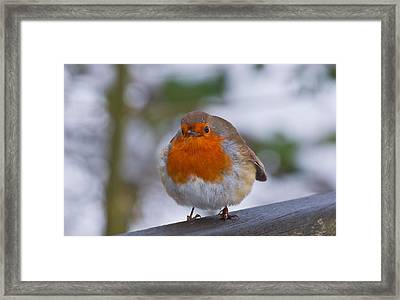 Robin 1 Framed Print by Scott Carruthers