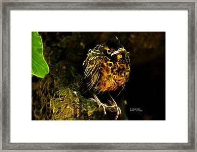 Robin - 6386 F Framed Print by James Ahn