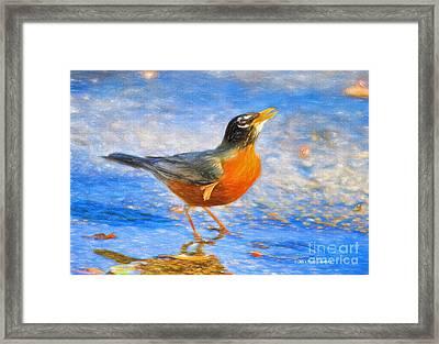 Robin In Florida Framed Print