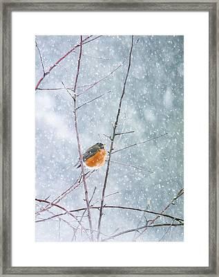 Robin In Snow Framed Print by Rebecca Cozart
