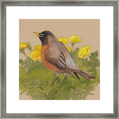 Robin In The Dandelions Framed Print by Tracie Thompson