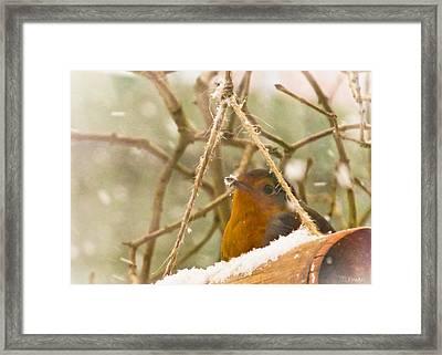 Robin In Winter Framed Print