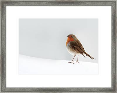 Robin Into The Snow Framed Print
