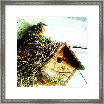 Robin Nest On Wren House Framed Print by Patricia Januszkiewicz