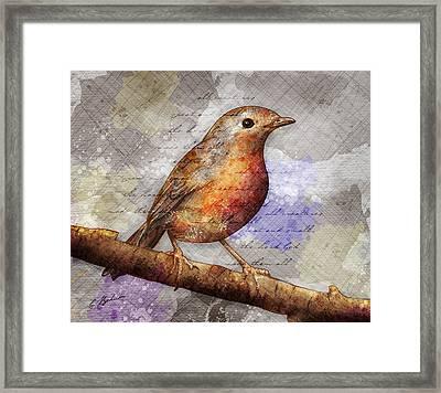 Robin On Branch Framed Print by Gary Bodnar