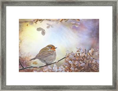 Robin On Dreams Framed Print