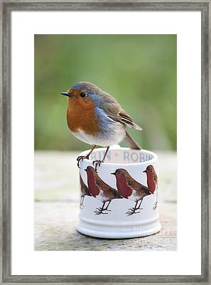 Robin Redbreast Framed Print by Tim Gainey