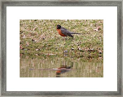 Robin Reflection Framed Print by Dan Sproul