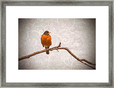 Framed Print featuring the photograph Robin With Damask Background by Peggy Collins
