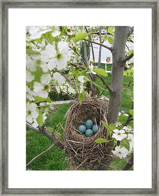 Framed Print featuring the photograph Robins Egg Nest by Margaret Newcomb