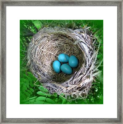 Framed Print featuring the photograph Robin's Eggs by Ramona Johnston