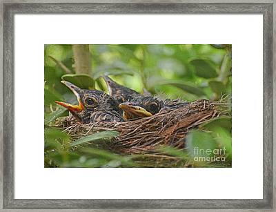 Robins In The Nest Framed Print by Debbie Portwood