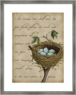 Robin's Nest Framed Print by Christy Beckwith