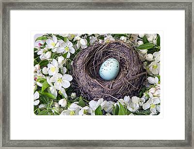 Robin's Nest Framed Print by Edward Fielding