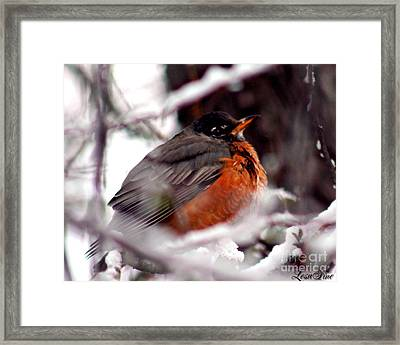 Framed Print featuring the photograph Robins' Patience by Lesa Fine
