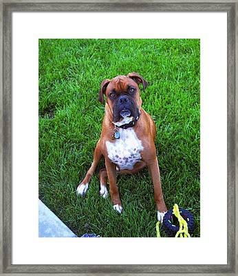 Rocco Framed Print