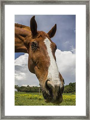 Rocinante Of Don Quixote Framed Print by Christian  Svastits
