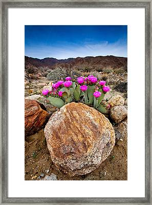 Rock And Beavertail Framed Print