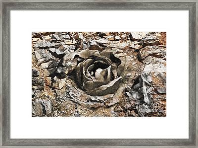 Rock And Rose 2 Framed Print