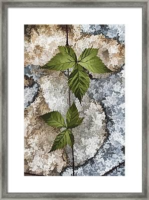 Rock And Vine Framed Print