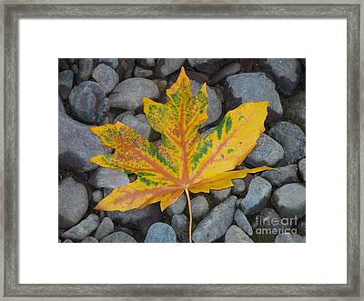 Framed Print featuring the photograph Rock Creek Leaf by Chalet Roome-Rigdon