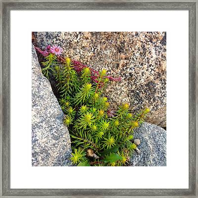 Framed Print featuring the photograph Rock Flower by Meghan at FireBonnet Art