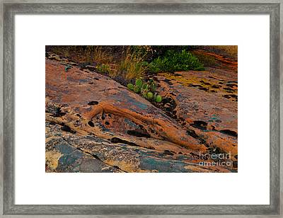 Rock Garden Framed Print