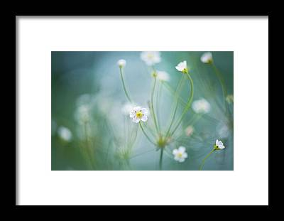 Jasmine Framed Prints