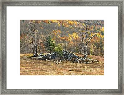 Rock Pile In Maine Blueberry Field Framed Print