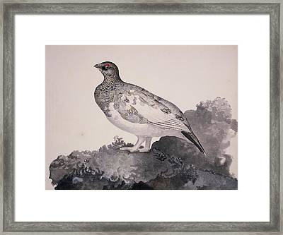 Rock Ptarmigan, 19th Century Framed Print by Science Photo Library