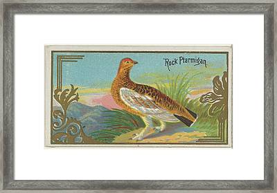 Rock Ptarmigan, From The Game Birds Framed Print by Issued by Allen & Ginter