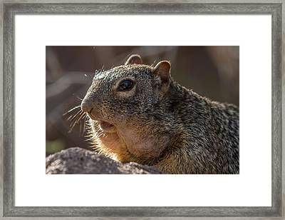 Framed Print featuring the photograph Rock Squirrel by Beverly Parks